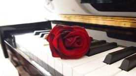 rose-671382__180